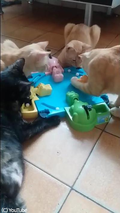 テーブルゲームで遊ぶ猫たち01