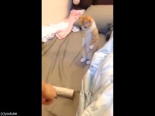 背筋を伸ばして掃除を待つ子猫01