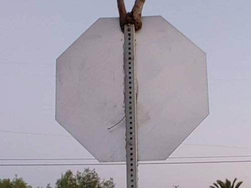 交通標識と木01