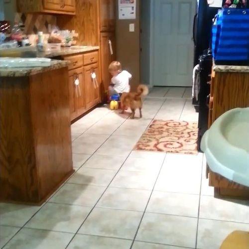 赤ちゃんをフェッチする犬03