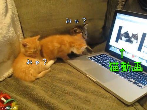 猫動画を見た子猫たち00