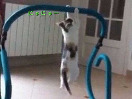 ハードトレーニングする猫00