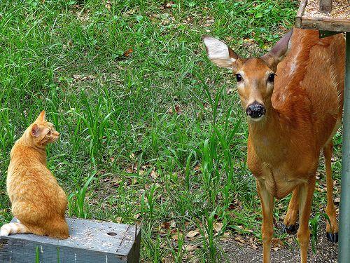鹿と猫07