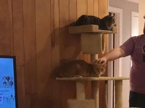猫が見つめてくる08