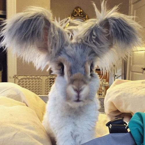 翼のような耳を持つウサギ01