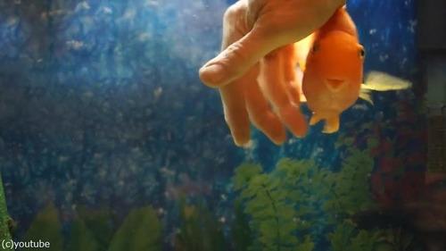 なつっこい魚02