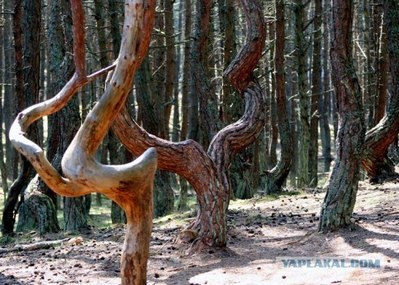 ロシアの踊る森05