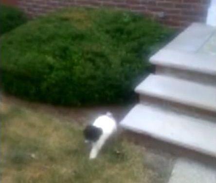 階段が怖い子犬…まさかの方法08