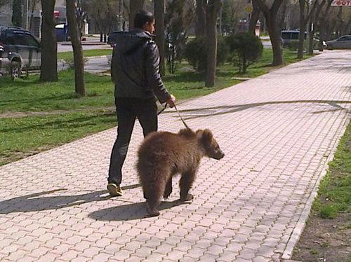 ロシアのクマ01