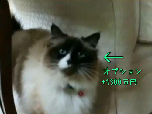 家に猫をつけて売買00