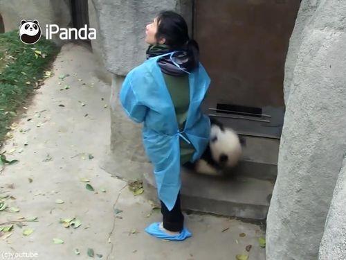 ドアストッパーな赤ちゃんパンダ07