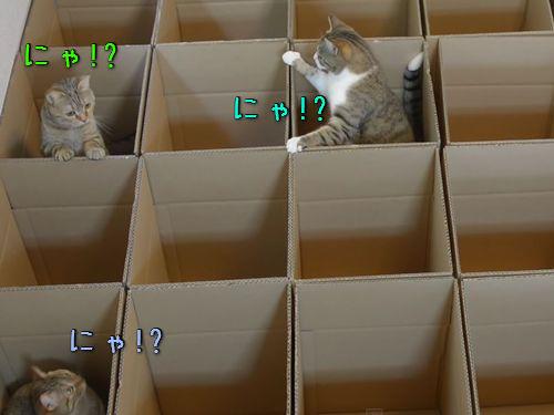 子猫のジャングルジム00