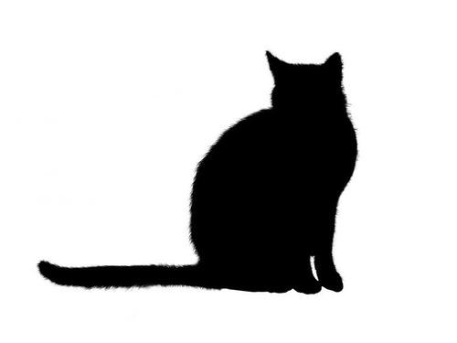 猫シッター