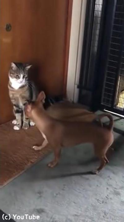 犬と猫のテンションの違い02