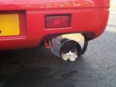 神出鬼没の猫00