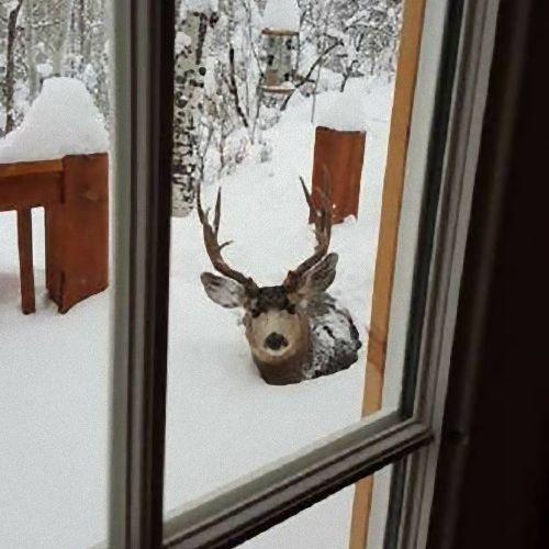 カナダの寒さ16