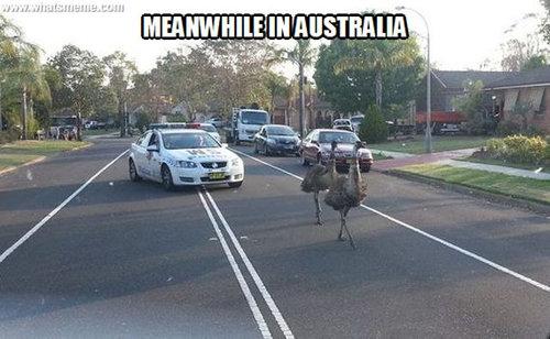 そのころオーストラリアでは10