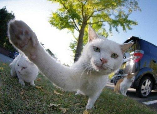 猫のハイタッチ12