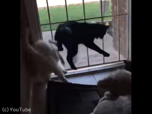犬と猫の違い03