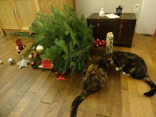 クリスマスとペット19