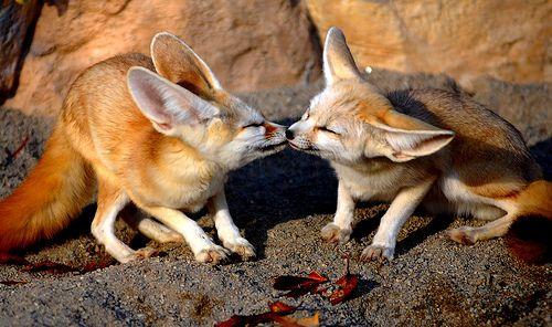 動物たちの熱烈キス01