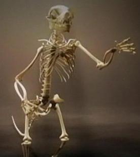 ヒトや類人猿の共通の祖先03