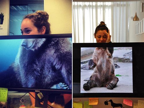 職場で「動物園ごっこ」11