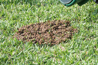 「家にハチの巣が…」素人が繰り広げたムチャな死闘09