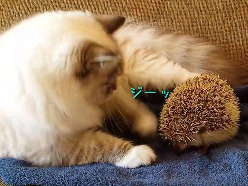 ハリネズミと猫00