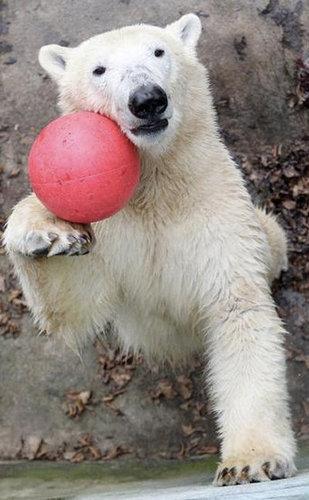 楽しい白クマ05