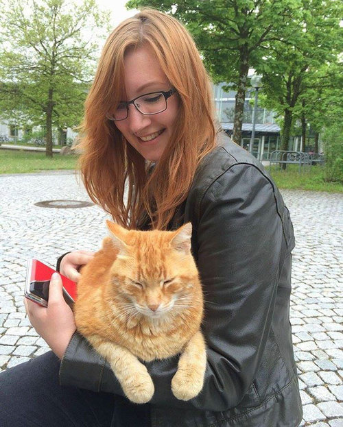 アウグスブルク大学の猫03