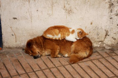 動物のベッド19