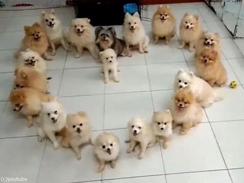 子犬でハート00