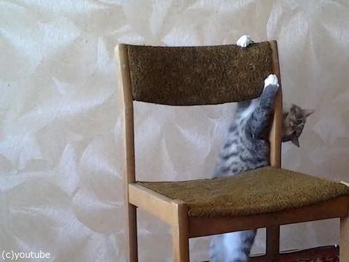 猫がイスでアクロバティック04