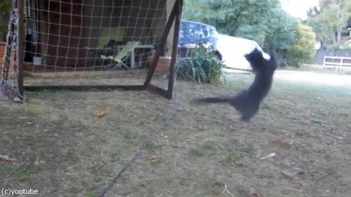 世界最高のゴールキーパー猫06