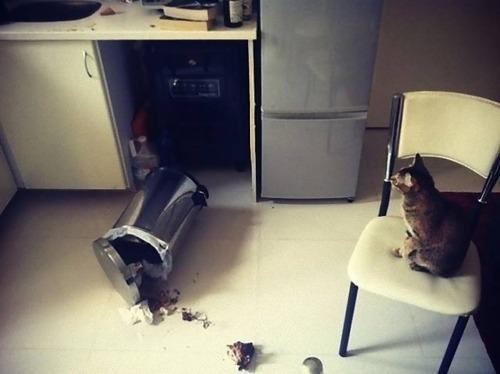 猫に敗北した人々06