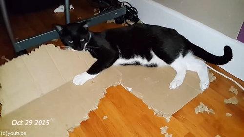 ダンボールをぼこぼこに粉砕する猫05