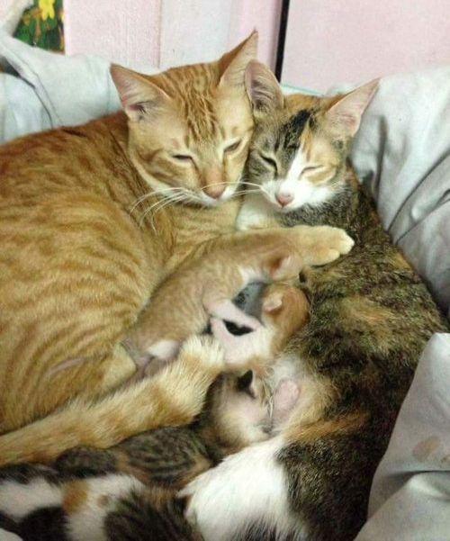 家族愛の強いパパ猫04