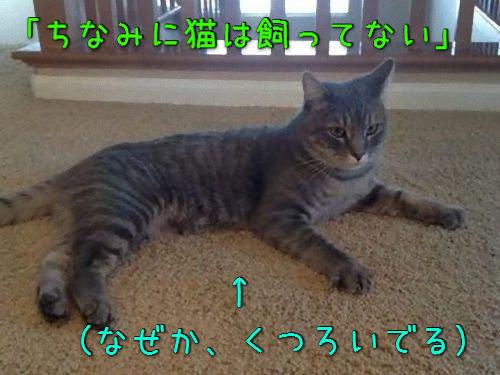 うちの猫じゃない00
