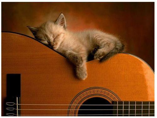 眠る猫03