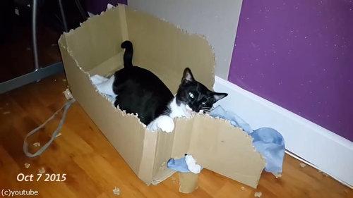 ダンボールをぼこぼこに粉砕する猫02