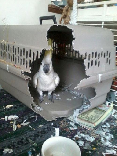鳥の脱出01
