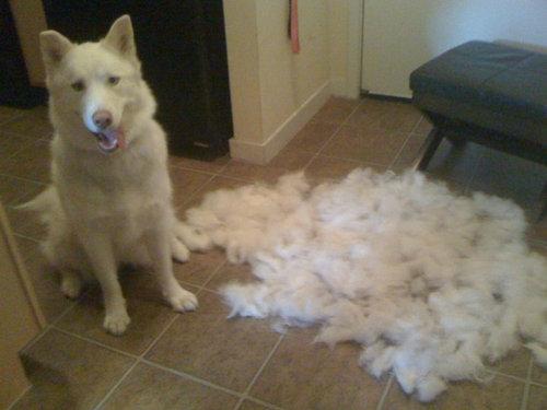 犬の毛変わり02