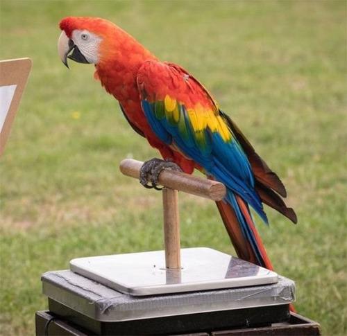 動物の体重の測り方27
