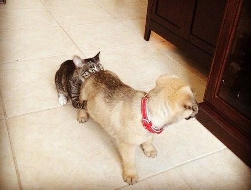 犬より強い猫11