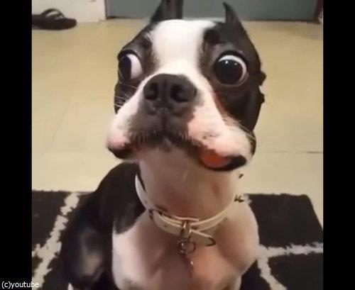 ニンジンを隠したかった犬01