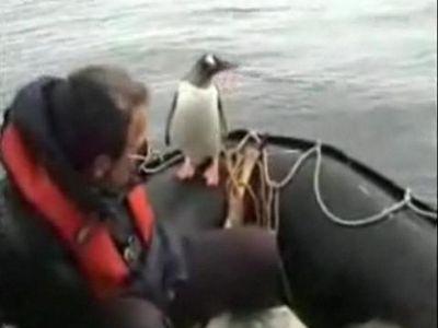 ボートの上に逃げてきたペンギン