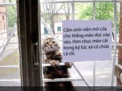 このオス猫を入れてやってはいけない00