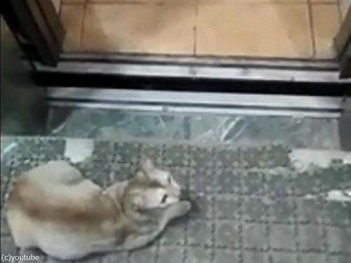 エレベーターの降りる階を理解してる猫02