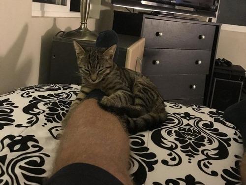 帰宅したら見知らぬ猫がいた05
